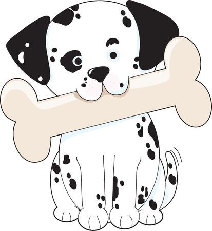 dalmatian: Cute Dalmatian puppy holding a big bone in its mouth