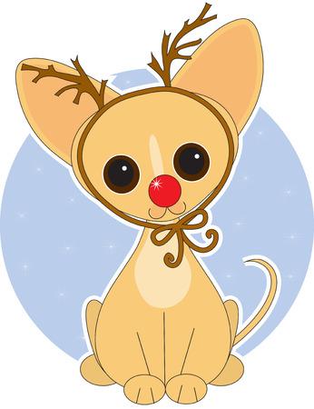 rudolf: Chihuahua  dressed for Christmas as Rudolf