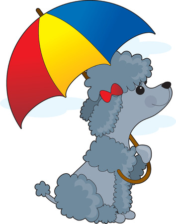 A little grey poodle is sitting with an umbrella anticipating some rain Иллюстрация