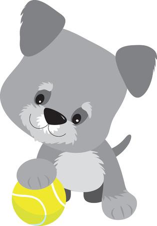 welpe: Cute little Schnauzer Welpe mit einem Big-Kopf auf der Suche mit der Tatze auf einen Tennisball neugierig