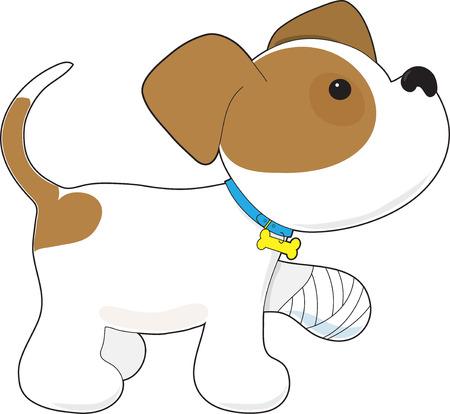 귀여운 강아지 그것에 붕대가 그의 발을 잡고있다