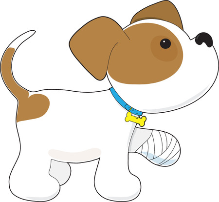A cute puppy is holding up his paw that has a bandage on it