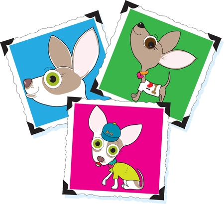 Three different photographs of a Chihuahua, each pasted on a white background using old fashioned black photo corners.