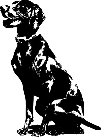 A silhouette of a sitting German short haired Pointer  photo