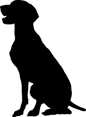 A silhouette, profile view of a sitting German Pointer  版權商用圖片