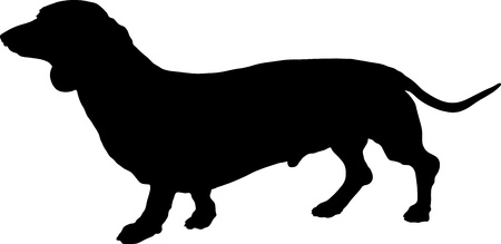 A silhouette image of a standing male Dachshund dog