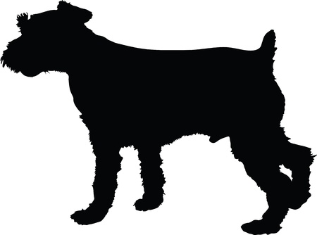 A silhouette image of a standing male Schnauzer dog  photo
