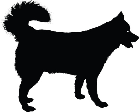 profile: A profile of a  Husky dog in black silhouette   Stock Photo