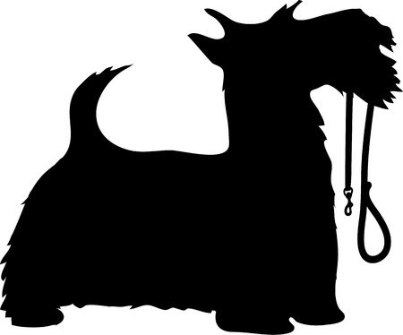 leash: A black silhouette profile of a Scottie dog with its leash held in its mouth, tail up and eager to go for a walk