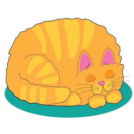 A big fat marmalade cat is asleep on a teal rug