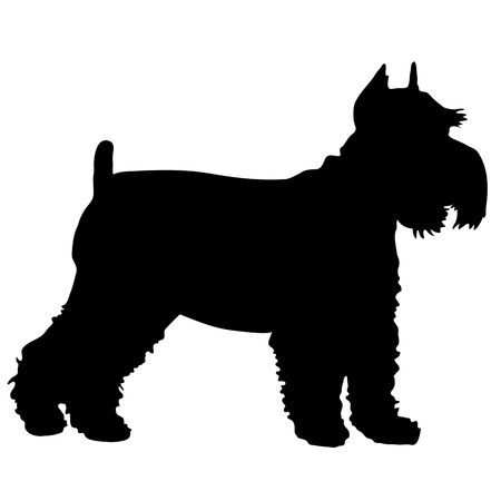 animal silhouette: A black silhouette of a Schnauzer standing