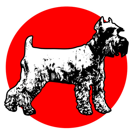 Stylized illustration of a standing Schnauzer with a red circle background