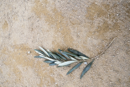 Close up of eucalyptus leaves on a pebbled street