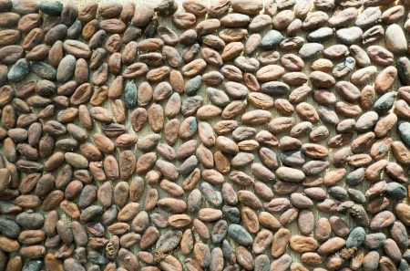 Close up of cocoa beans before they are processed
