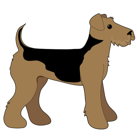 airedale terrier: A cartoon illustration of an Airedale Terrier