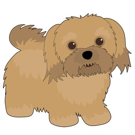 A cartoon illustration of a Havanese dog