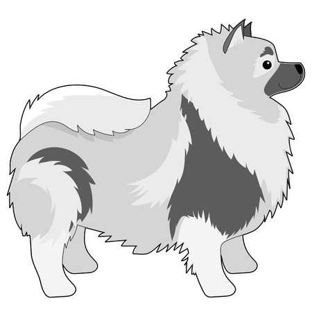 A cartoon illustration of a Keeshond Çizim