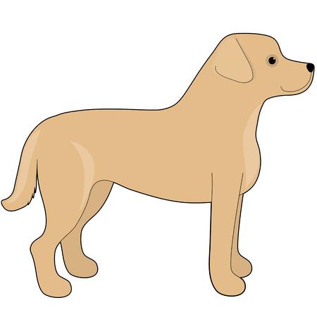 labrador: A cartoon illustration of a Labrador Retriever