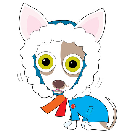 A cute little Chihuahua is wearing a winter coat and shivering. Its eyes are big because its upset by the cold weather