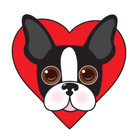 A cute illustration of a Boston Terrier face with a red heart in the background Vectores