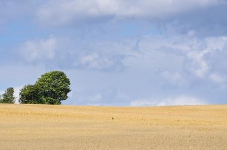 beautiful landscape photo