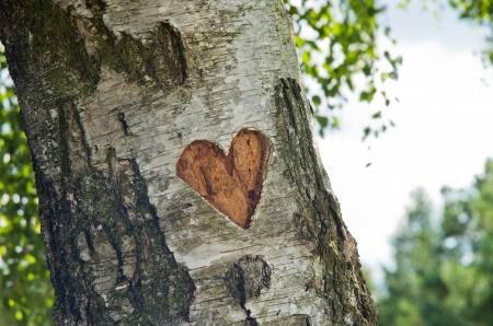love tree: carved heart in tree Stock Photo