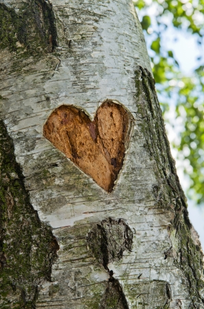 endless: carved heart in tree Stock Photo