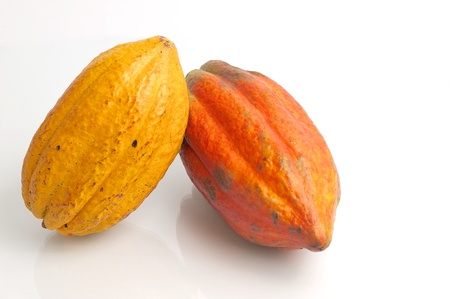 bean plant: Yellow and red cocoa fruit Stock Photo