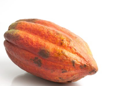 bitter fruit: Cocoa fruit