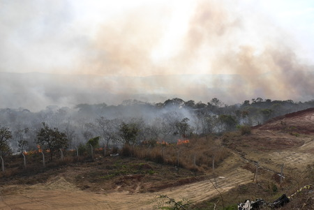 Burning Bush in Brazil