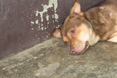lye: Dog look ahead while lying on the concrete floor and weathered wall Stock Photo