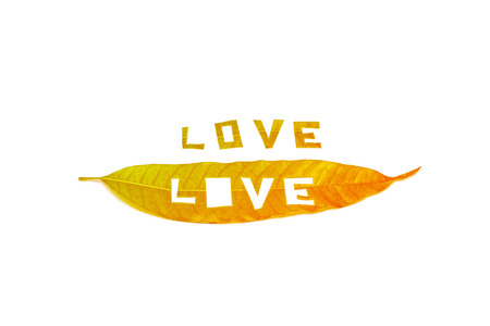 mango leaf: Love word on mango leaf vintage style on white background for valentine day concept