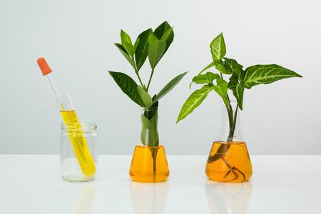 天然植物と石油実験室のコンセプトを持つ科学ガラス製品医学。 写真素材