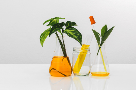 Science glassware medicine with natural plant and oil laboratory concept.