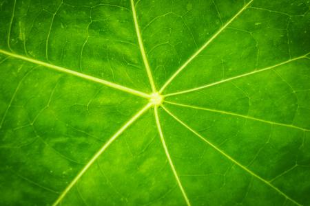 Green Leaf texture closeup nature pattern plant. biology.