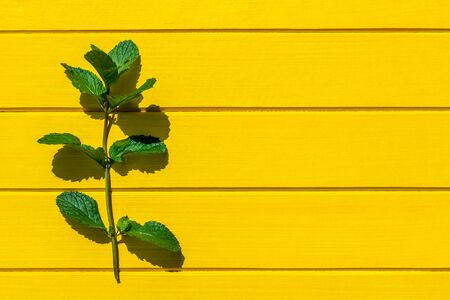 Fresh mint leaves isolated on yellow wood background, top view.