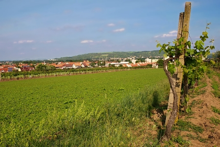 and the stakes: panorama town near the vineyards with wooden stakes.
