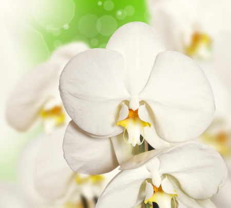 White orchid on the background more blurred flowers  Stock Photo