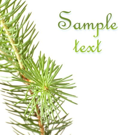 Pine branches isolated on white background Stock Photo