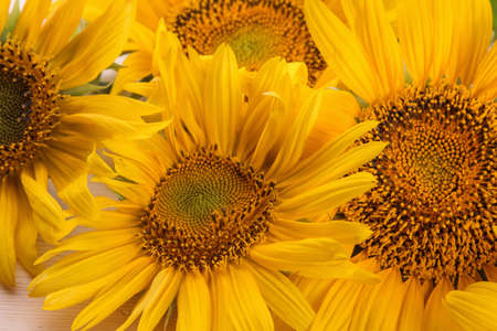 a lot of yellow bright sunflower flowers close-up on a natural wooden table Foto de archivo
