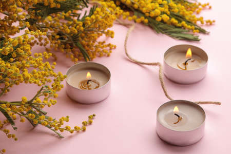 Beautiful flowers of yellow mimosa and candles on a trendy pink background. close-up Banco de Imagens