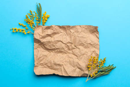 Beautiful flowers of yellow mimosa and a blank for text on a blue trendy paper background. top view. Banco de Imagens