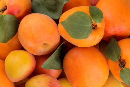 composition of many varieties of peach. fresh fruit peaches. background of peaches. close-up Reklamní fotografie