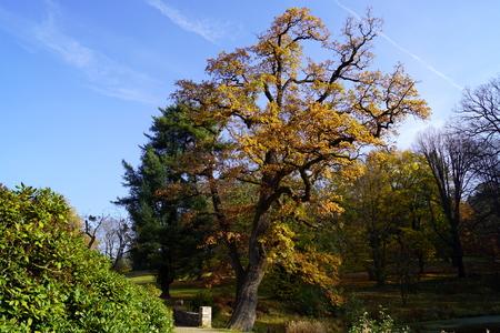 Park, old oak - Vrchotovy Janovice, Czech Republic