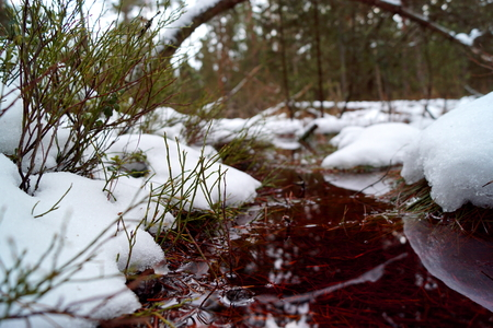 Peat bog, snow and red watercolor - Cervene Blato, South Bohemia Reklamní fotografie - 116371234