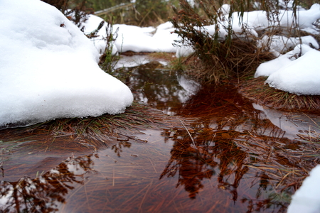 Peat bog, brown water and snow - Cervene Blato, South Bohemia