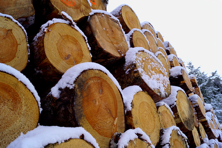 Trunks of coniferous trees and snow - Czech Republic, South Bohemia Stock Photo