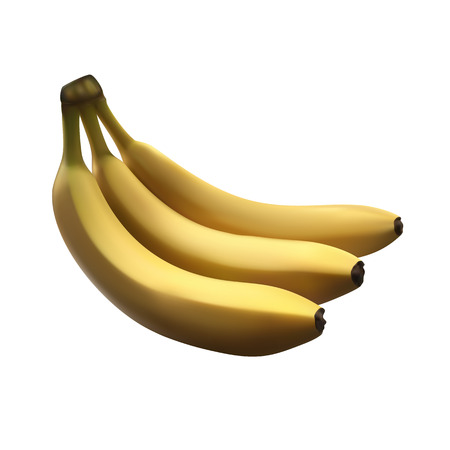 Realistic vector illustartion. Branch of fresh and tasty bananas isolated on white background