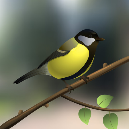 Tit. Yellow bird Summer or spring illustration