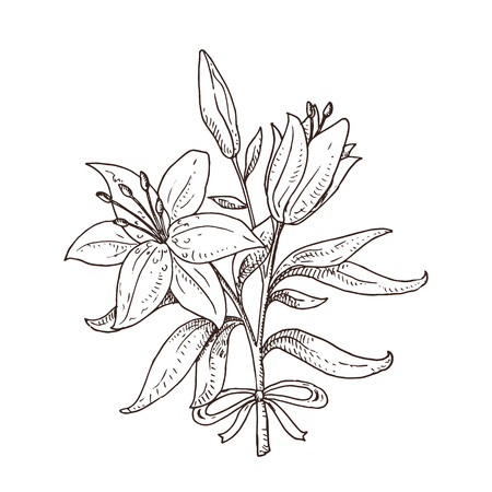 Black and white hand drawn lily bouquet. Beautiful flowers. Spring symbol. 일러스트